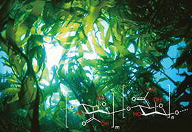 2ウィークピュア うるおいプラスのアルギン酸
